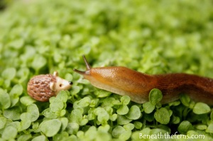 Fairy gardens supplies accessories miniatures hedgehog slug beneaththeferns
