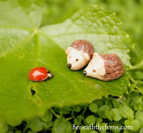 Mini hedgehog ladybugs fairy gardens supplies accessories beneaththeferns