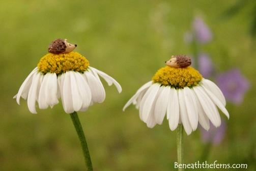 Miniature hedgehogs fairy garden supply accessory beneaththeferns daisy